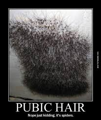 gray pubic hairs pubic hair ladies don t let it get to this stage the best