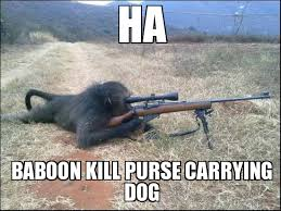 Baboon Meme - search a meme ha baboon kill purse carrying dog weknowmemes