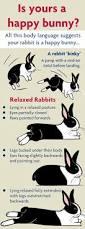 rabbit happy bunny rspca darcy
