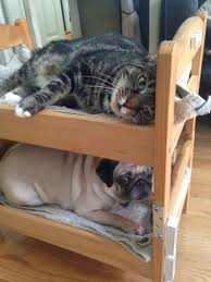 Dog Bunk Beds Furniture by Can A Dog And A Cat Be Bunk Bed Mates Seems So Ikea Hackers
