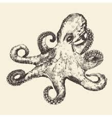 octopus royalty free vector image vectorstock