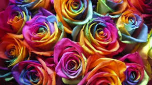 multicolored roses how to make rainbow roses a step by step guide