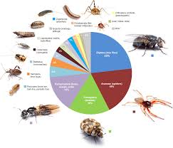 spiders eat 400 to 800 million tons of insects every year