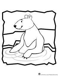 polar bear coloring animal jr