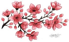 lori illustration cherry blossoms