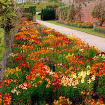 wall flowers wallflowers on dobies