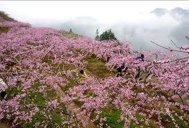 zhangjiajie natural flower garden there is flower bloom every