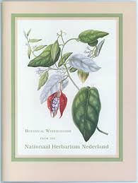 Bard Center For Decorative Arts Botanical Watercolors From The Nationaal Herbarium Nederland