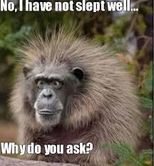 Funny Gorilla Memes - gorilla memes funny collection of ted nemes