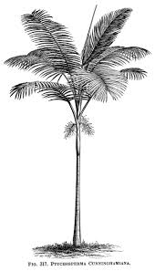 cocktail clipart black and white 25 unique palm tree clip art ideas on pinterest palm tree