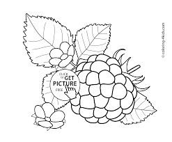 with flowers fruits and berries coloring pages for kids printable
