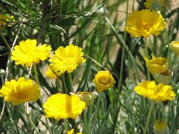native plants in the desert 10 desert trees and plants grown in the driest regions quick top