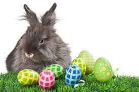 bunny easter how the bunny got involved in easter raising rabbits for meat