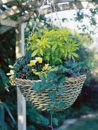 create a winter flower and foliage basket hgtv
