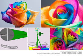 Colorful Roses How To Make Colorful Roses The Meta Picture