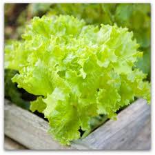 vegetable gardening plans designs worksheets planting guide