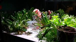 Ikea Hydroponics Garden Ikea Hydroponics 3 Months On Tips And Hacks Less Stuff The
