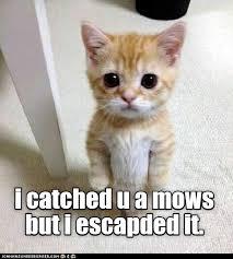 Lol Cat Meme - i sorry lolcats lol cat memes funny cats funny cat