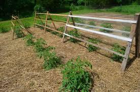 How To Build A Trellis 32 Diy Tomato Trellis U0026 Cage Ideas For Healthy Tomatoes