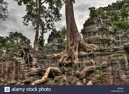 trees growing out of the ruins of ta prohm temple angkor wat