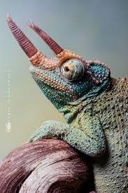 53 best lizards frogs and such images on pinterest reptiles
