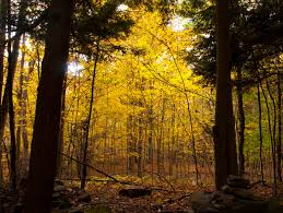 Vermont forest images Ann cantelow 39 s photo of the day jpg