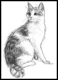 cat sketch by acornballs d6v3mu8 jpg 774 1032 drawing