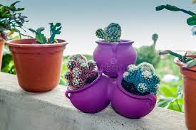 ornamental cactus stock photo image 53265197