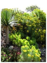 Quail Botanical Gardens Encinitas California San Diego Botanical Garden Formerly Quail Gardens Encinitas Ca
