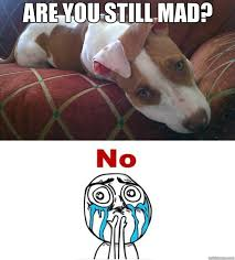 You Still Mad Meme - you still mad meme keywords and pictures