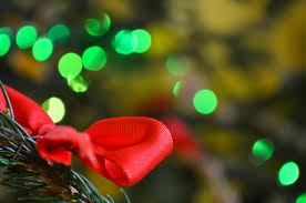 New Year Christmas Tree Decorations by Free Images Branch Blossom Plant Leaf Flower Petal Red
