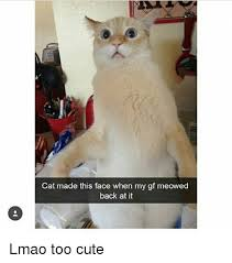 Too Cute Meme Face - cat made this face when my gf meowed back at it lmao too cute