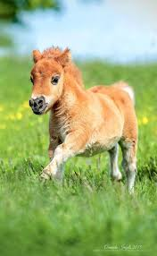 best 25 cute baby horses ideas on pinterest baby horses pony