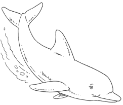 coloring pages alluring dolphin pictures color beautiful