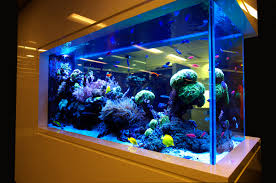 beautiful coral aquarium design ideas for home interior modern