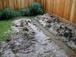 Water Drainage Problems In Backyard Backyard Drainage Solutions Landscaping Network