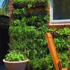 vertical wall gardens kits grow veggies u0026 herbs at home