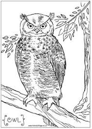 owl coloring pages to print olivia u0027s owl party pinterest owl
