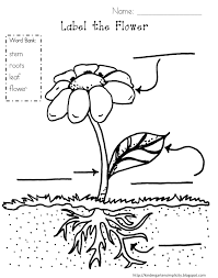 parts of a plant coloring page funycoloring