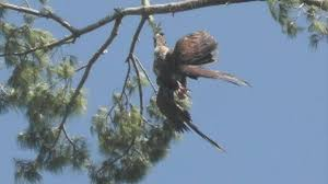 Tree Army Veteran Rescues Eagle Stuck In Tree Youtube