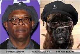 Samuel L Jackson Memes - samuel l jackson totally looks like samuel l barkson totally looks