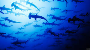bbc earth the sensational world of sharks and rays