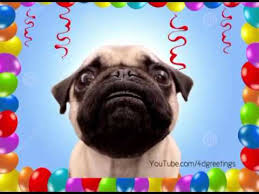 Happy Birthday Pug Meme - happy birthday pug funniest birthday song youtube