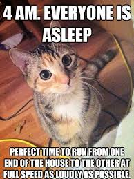 Night Meme - image cat meme cat is about to run around house in middle of night