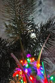 christmas palm trees christmas lights decoration