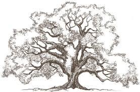 oak tree drawings tattos for