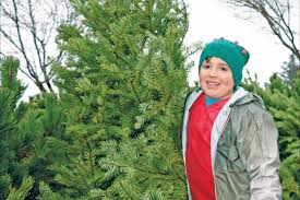 parksville to host annual christmas tree sale parksville