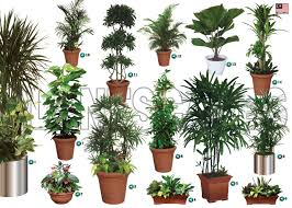 live indoor plant rental and service malaysia preserved trees