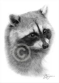 raccoon and siamese cat gary tymon u0027s blog