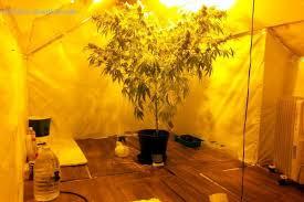 chambre de culture fait maison la tombe sur des plantations de cannabis